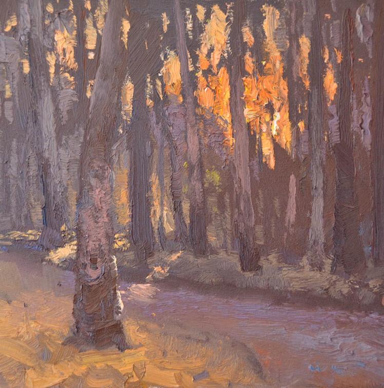 Warwick Fuller, 'Forest Sunrise, Barmah', 2013